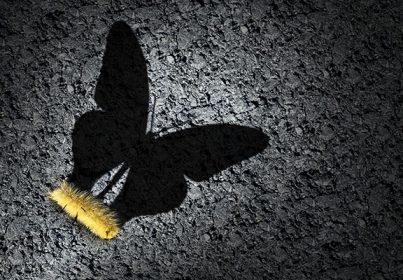 caterpillar_butterfly_shadow_8in_shutterstock_1178770855
